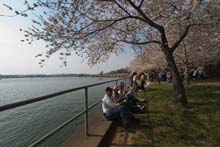 QTVR Tidal Basin Cherry Trees, VIew 1