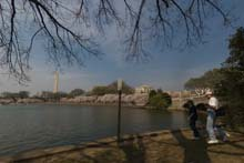 QTVR Tidal Basin Cherry Trees, VIew 2
