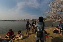 QTVR Tidal Basin Cherry Trees, VIew 3