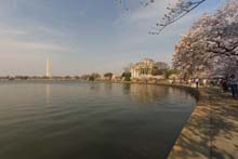 QTVR Tidal Basin Cherry Trees, VIew 7