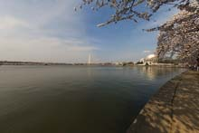 QTVR Tidal Basin Cherry Trees, VIew 8
