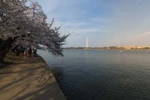 QTVR Tidal Basin Cherry Trees, VIew 9